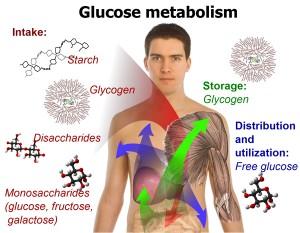 folosind ritmul metabolic în repaus pentru pierderea în greutate)